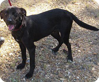 Labrador Retriever Mix Dog for adoption in Camden, Arkansas - Bud