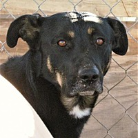 Adopt A Pet :: Jack - San Tan Valley, AZ