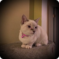 Adopt A Pet :: Sylvannas - Fairborn, OH