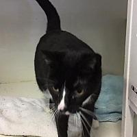 Adopt A Pet :: DJ - New Bern, NC