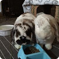 Adopt A Pet :: Timothy and Katie - Moneta, VA