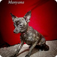 Adopt A Pet :: Manyana - Chester, IL