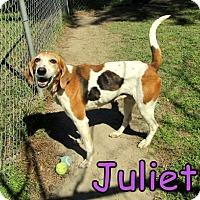 Adopt A Pet :: Juliet - Georgetown, SC