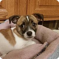 Adopt A Pet :: Carter - Media, PA