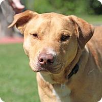 Adopt A Pet :: Alfred - Bryan, TX