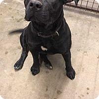 Adopt A Pet :: NALA - McCurtain, OK