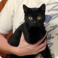 Adopt A Pet :: Pepper - Troy, OH