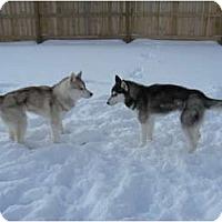 Adopt A Pet :: Zeus & Zoey - Belleville, MI