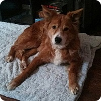 Adopt A Pet :: Maddie - Hamilton, ON