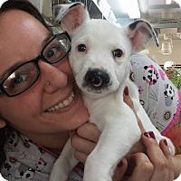 Adopt A Pet :: Zuri - Fort Lauderdale, FL