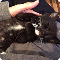 Adopt A Pet :: Lenci - Irvine, CA