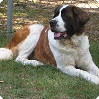 Adopt A Pet :: MAGGIE G - Sudbury, MA