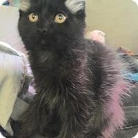 Adopt A Pet :: RJ - North Highlands, CA