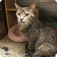 Adopt A Pet :: Glenda - Colmar, PA