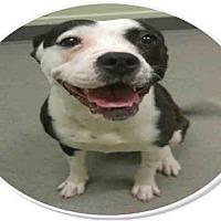 Adopt A Pet :: *CARLEY - Bakersfield, CA
