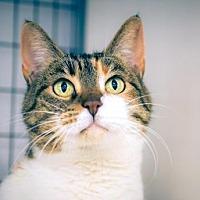 Adopt A Pet :: Reba - Santa Paula, CA