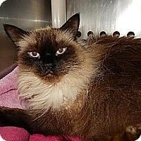 Adopt A Pet :: Tong - Hamilton, ON