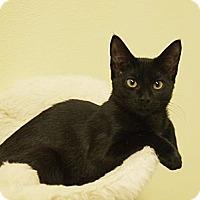 Adopt A Pet :: Kate - Ocean City, NJ