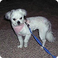 Adopt A Pet :: Miko - Denver, CO
