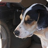 Adopt A Pet :: Manny - hartford, CT