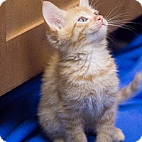 Adopt A Pet :: Camden - Chicago, IL