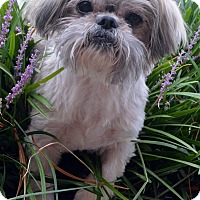 Adopt A Pet :: Randy-Adoption pending - Bridgeton, MO