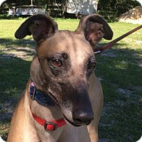 Adopt A Pet :: Kaitlyn - West Palm Beach, FL