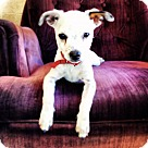 Adopt A Pet :: BUBBY (Bonded to Jenny)