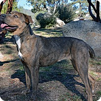 Adopt A Pet :: Contessa - Mountain Center, CA