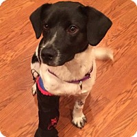 Adopt A Pet :: Kris (adoption pending) - Rexford, NY