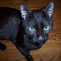 Adopt A Pet :: Phoenix - West Hartford, CT