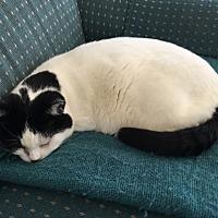 Adopt A Pet :: Marisol - Novato, CA