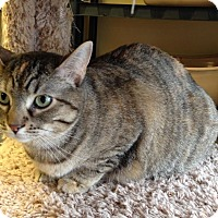 Adopt A Pet :: Miss Kitty - Larned, KS