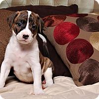 Adopt A Pet :: Bogey - Jackson, TN