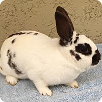 Adopt A Pet :: Clover - Bonita, CA