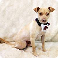 Adopt A Pet :: Elton - Dalton, GA