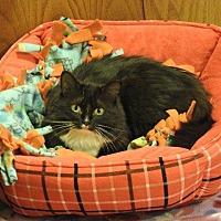 Adopt A Pet :: Scarlett - Chaska, MN