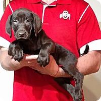 Adopt A Pet :: Hope - New Philadelphia, OH