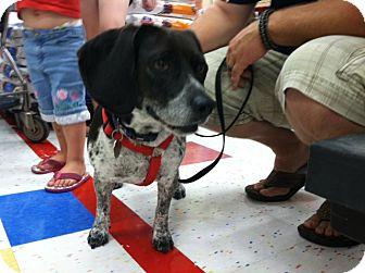 Beagle Dog for adoption in Omaha, Nebraska - Mindy