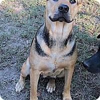 Adopt A Pet :: Lucy Shephard - Winnsboro, SC