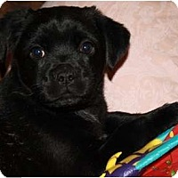 Adopt A Pet :: Carlie - Glastonbury, CT