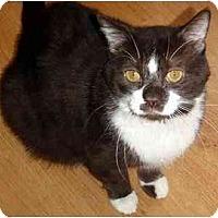 Adopt A Pet :: Tough Guy (TJ) - Hamilton, ON