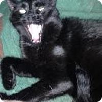 Adopt A Pet :: Burt - Randleman, NC
