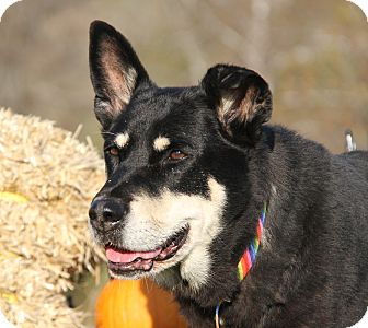 Husky Mix Dog for adoption in Marietta, Ohio - Zoey (Spayed)