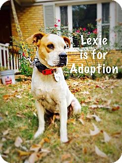 Boxer/Mixed Breed (Medium) Mix Dog for adoption in Matawan, New Jersey - Lexie
