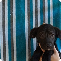 Adopt A Pet :: Ace - Oviedo, FL