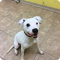 Adopt A Pet :: Waylon - Reisterstown, MD