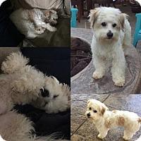 Adopt A Pet :: Ernie martino - Fresno, CA