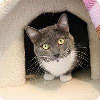 Adopt A Pet :: Peola - Yucaipa, CA