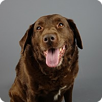 Adopt A Pet :: Winston - Columbia, IL